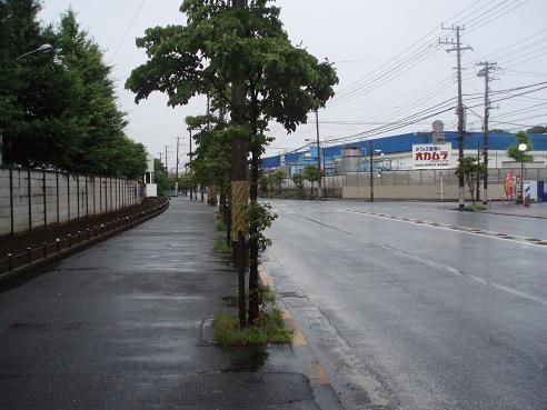野島公園~田浦 027.jpg