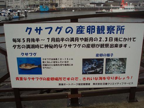 野島公園~田浦 051.jpg